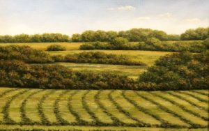 Windrows Last Cutting By Clarence King